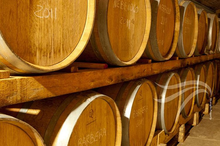 Langhe wine business for sale