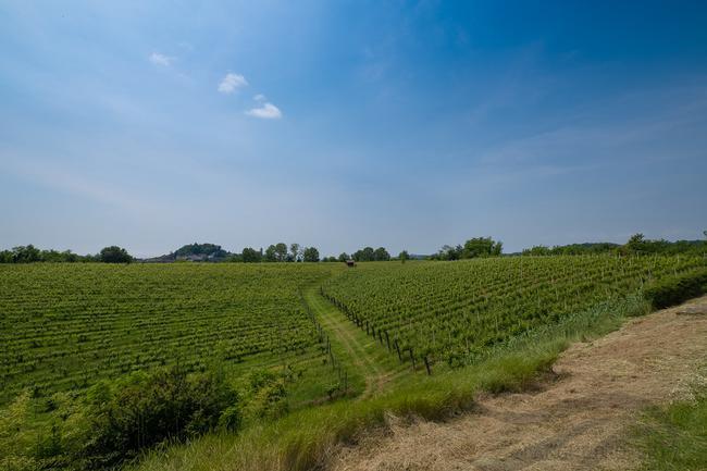 Piedmont wine estate-2