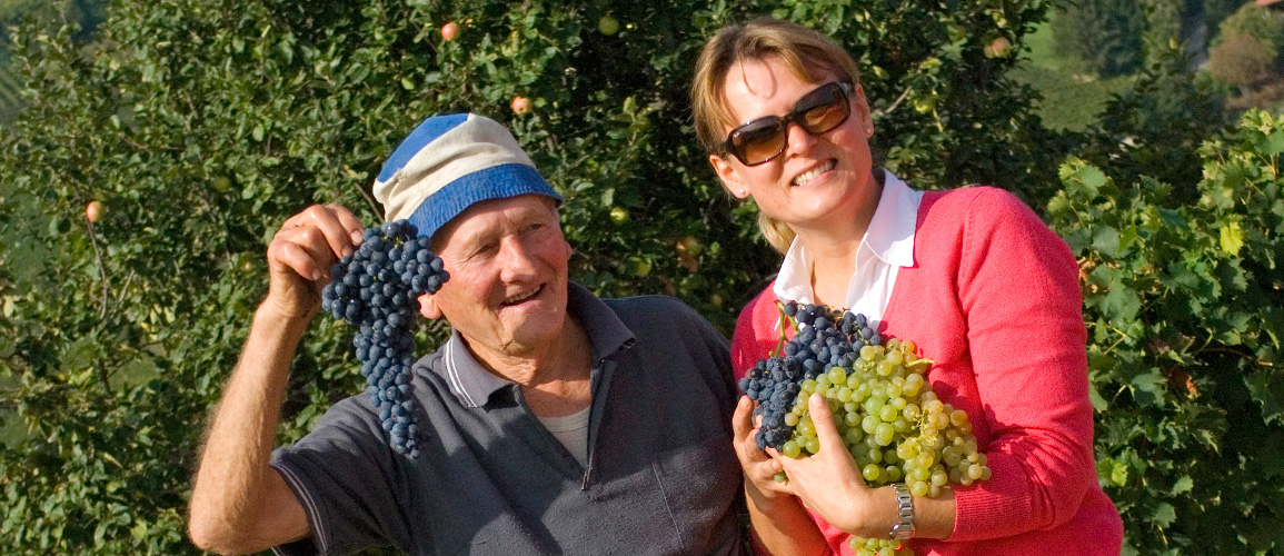 Langhe Wine Harvest