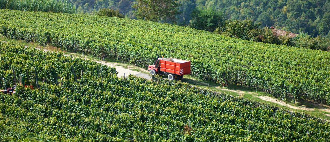 Vineyards in the Langhe